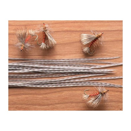 Pack Colgadera Whiting 12 Plumas