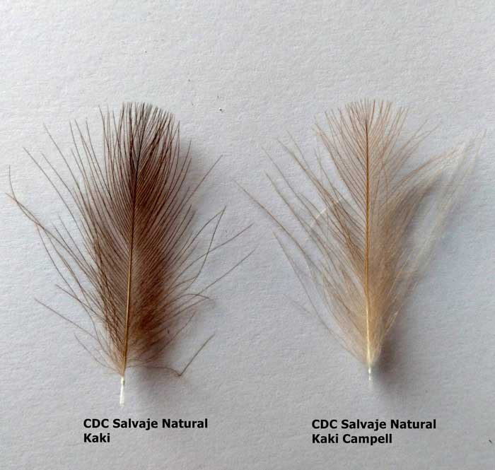 plumas de cdc salvaje natural