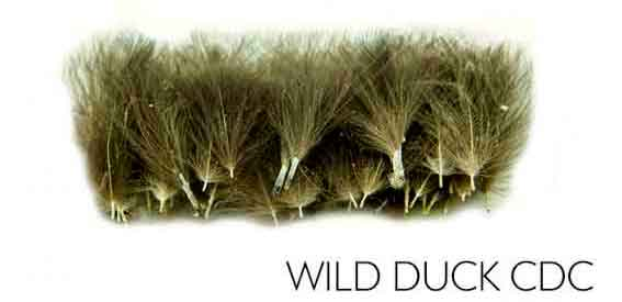 wild-duck-cdc-polish-quills-pato-plumas-cdc-salvaje